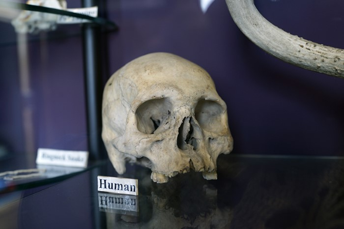 Human skull at nature center, Madison, Conn. 2016