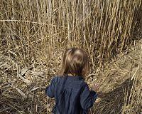 Golden hair in the salt hay, CT 2016